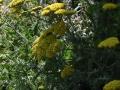 Hortus Tuiontwerp - Wilde tuin